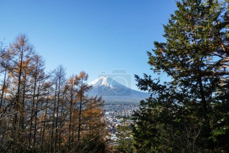 Mountain Fuji in the morning with tree in front at Chureito pagoda in Shimoyoshida