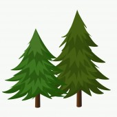 Pine Trees Vector Illustration.Coniferous Tree.