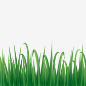 Green grass border with white background.