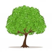 Isolated shade tree on white background.