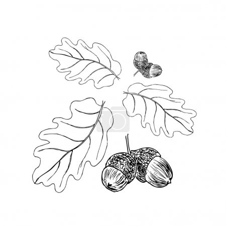 Oak branch with leaves in black ink. Art illustration