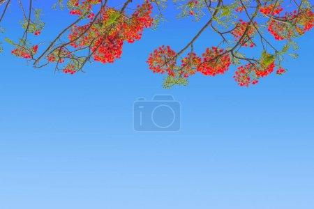 Photo for Red or Orange Flower Frame on blue sky background. - Royalty Free Image