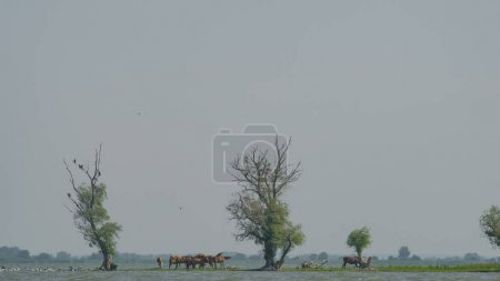 Several horses graze on the island under the trees...